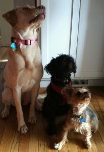 Sophie, Maya, McKenna