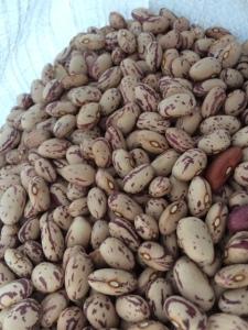 Pretty beans.
